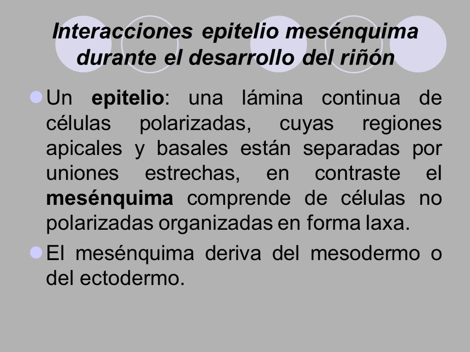 Interacciones epitelio mesénquima durante el desarrollo del riñón