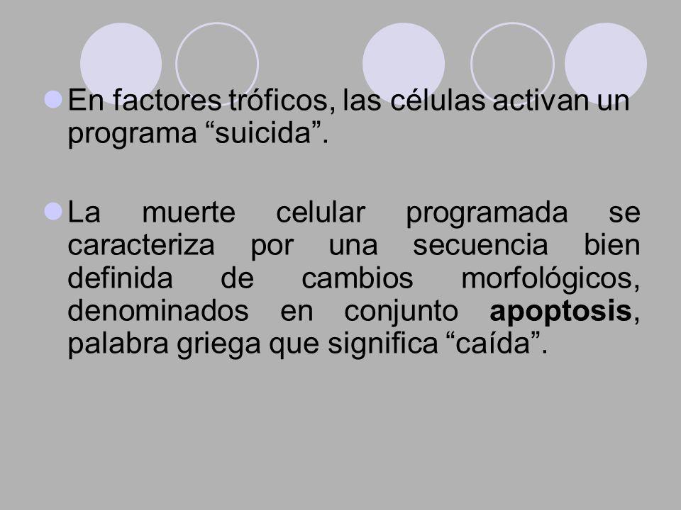 En factores tróficos, las células activan un programa suicida .