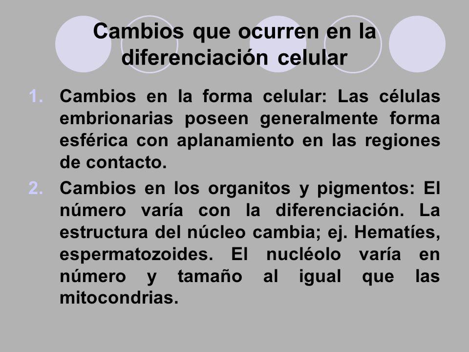 Cambios que ocurren en la diferenciación celular