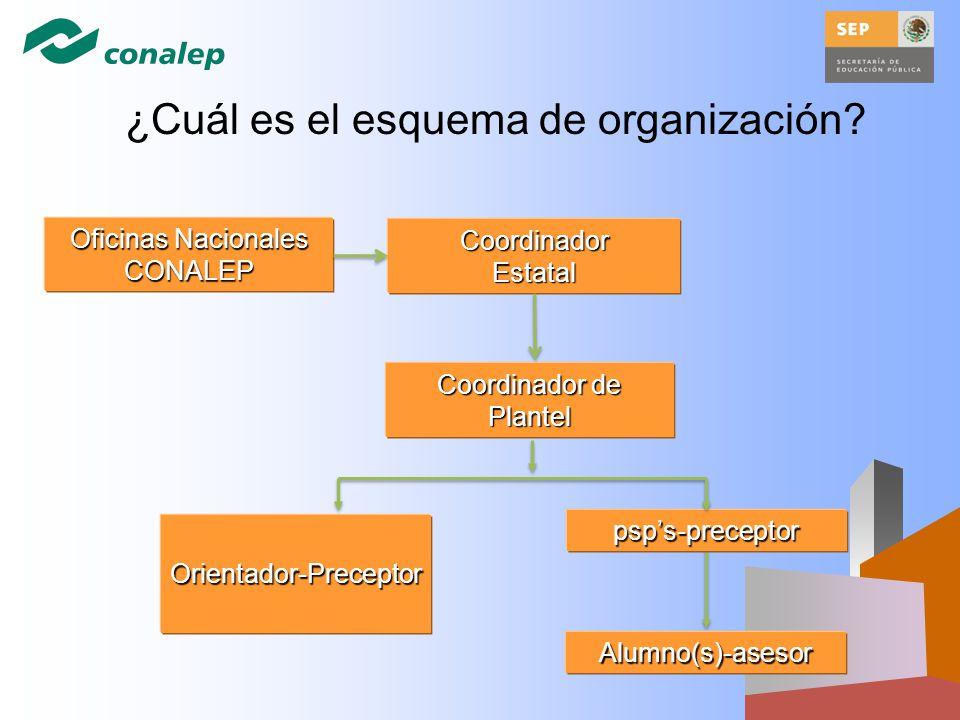 ¿Cuál es el esquema de organización