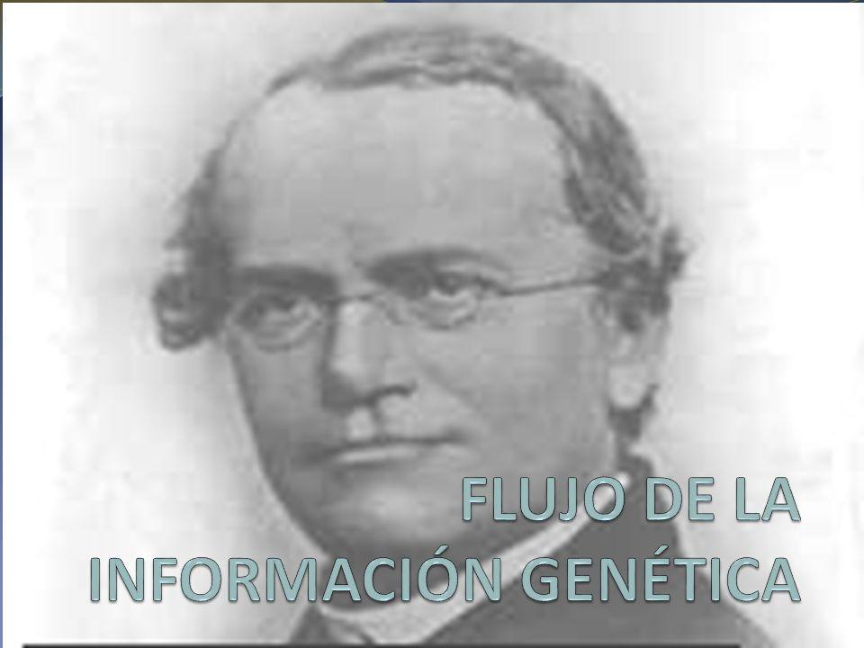 FLUJO DE LA INFORMACIÓN GENÉTICA