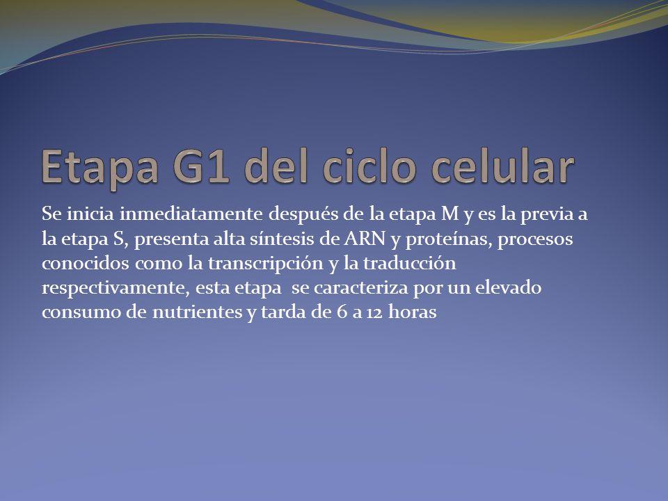 Etapa G1 del ciclo celular