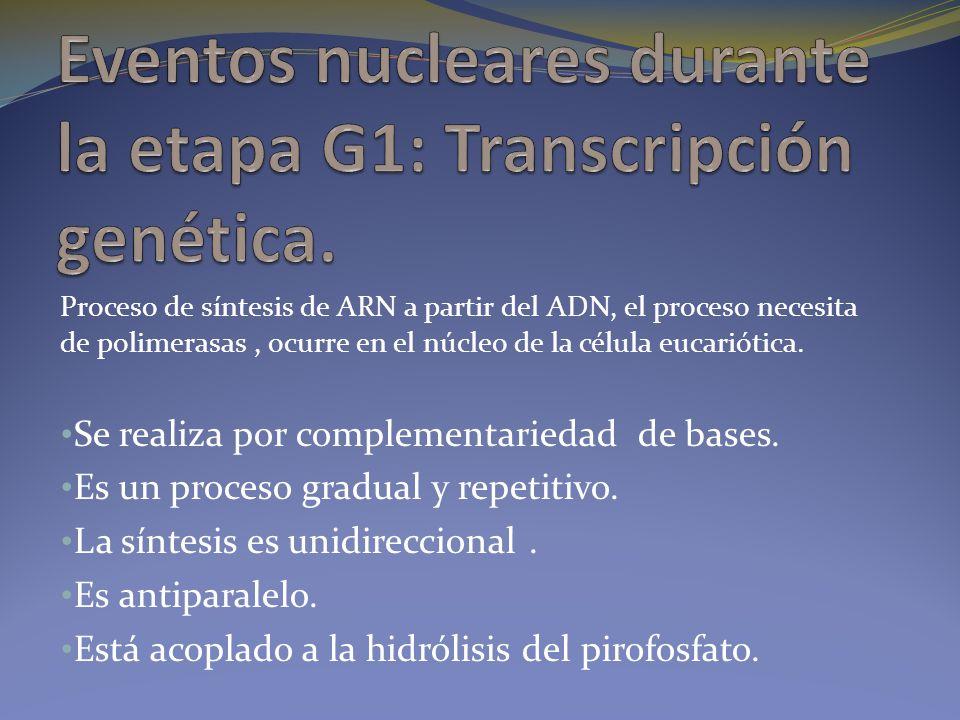 Eventos nucleares durante la etapa G1: Transcripción genética.