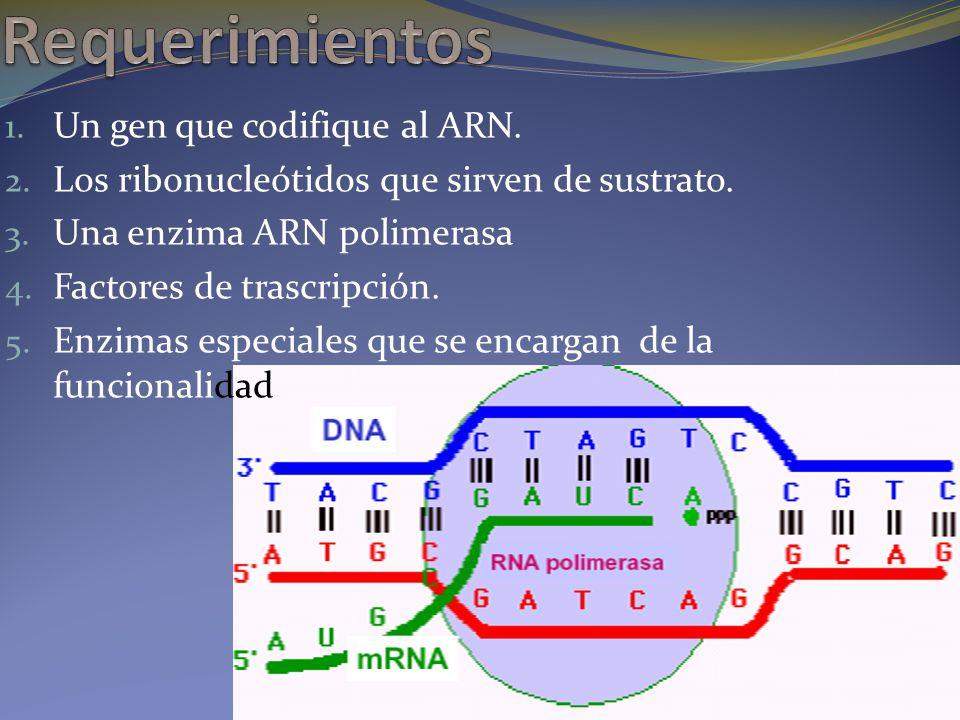 Requerimientos Un gen que codifique al ARN.