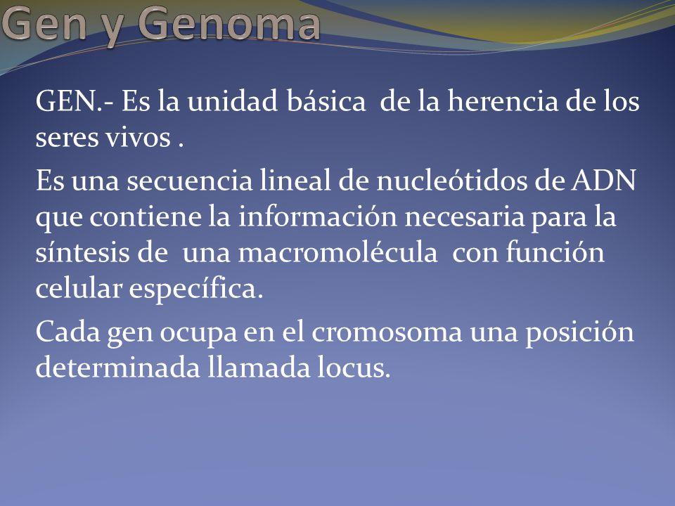 Gen y Genoma GEN.- Es la unidad básica de la herencia de los seres vivos .