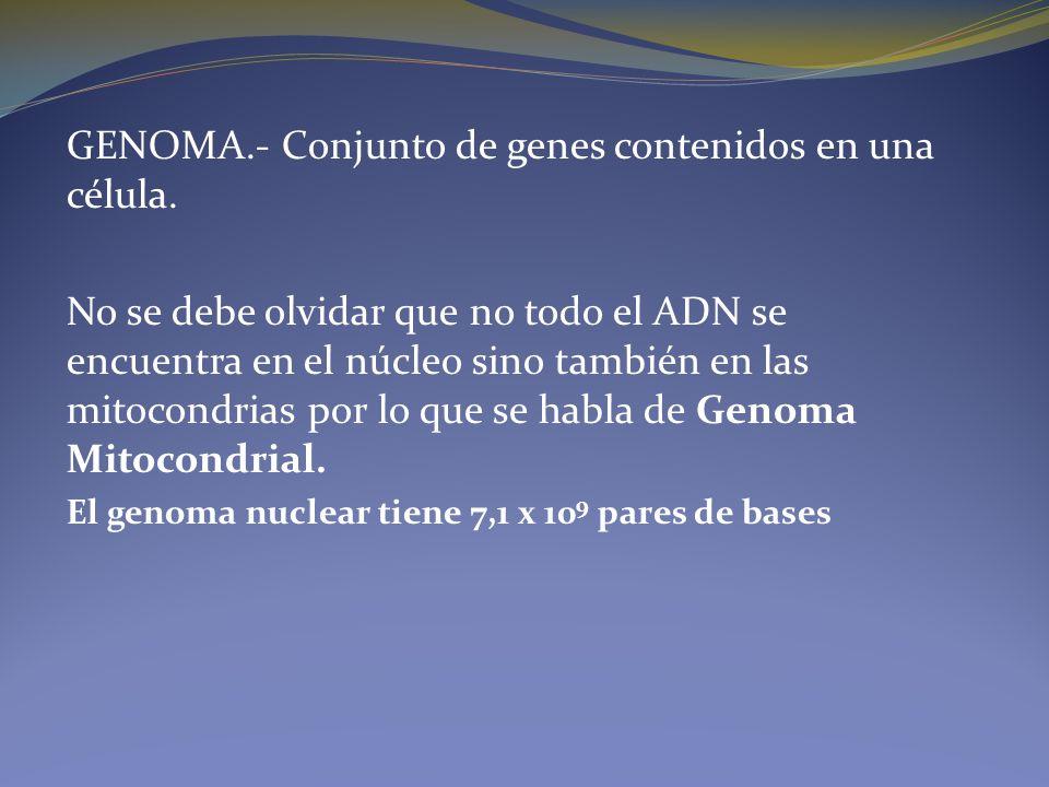 GENOMA.- Conjunto de genes contenidos en una célula.