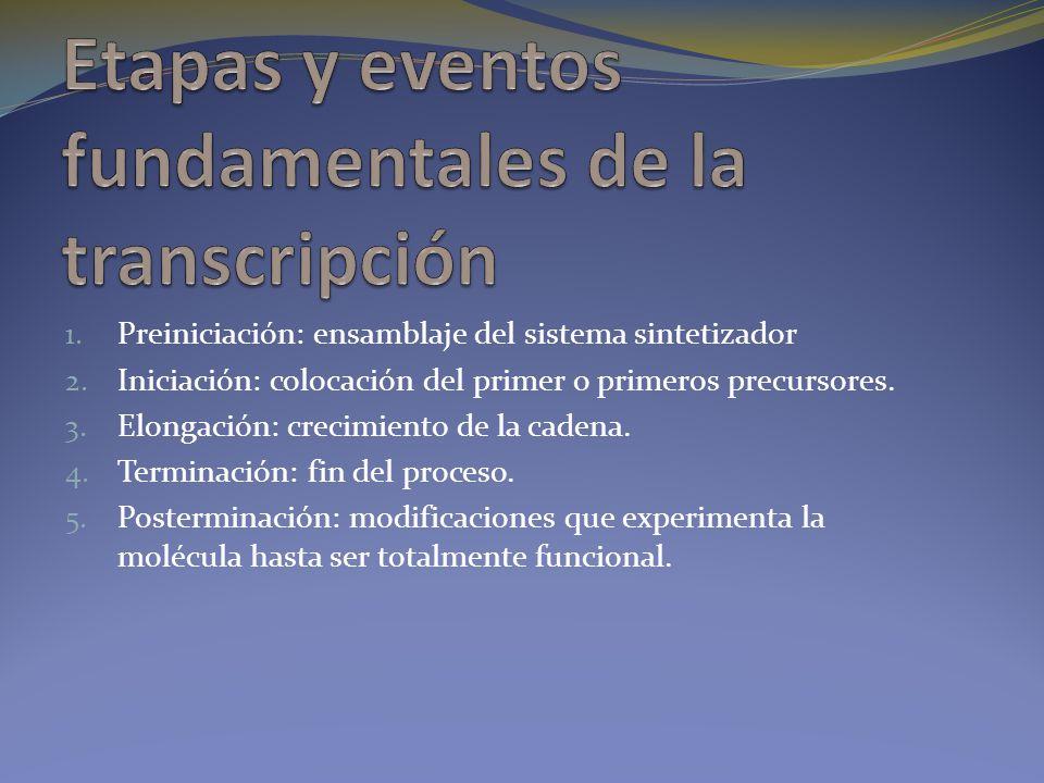Etapas y eventos fundamentales de la transcripción