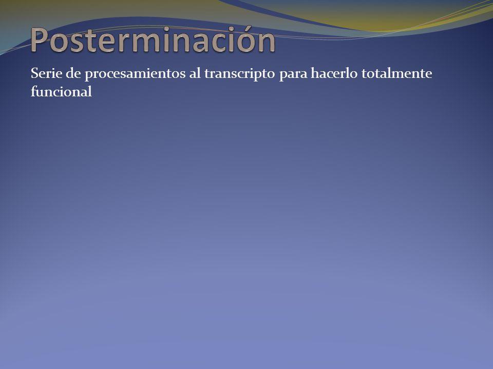 Posterminación Serie de procesamientos al transcripto para hacerlo totalmente funcional