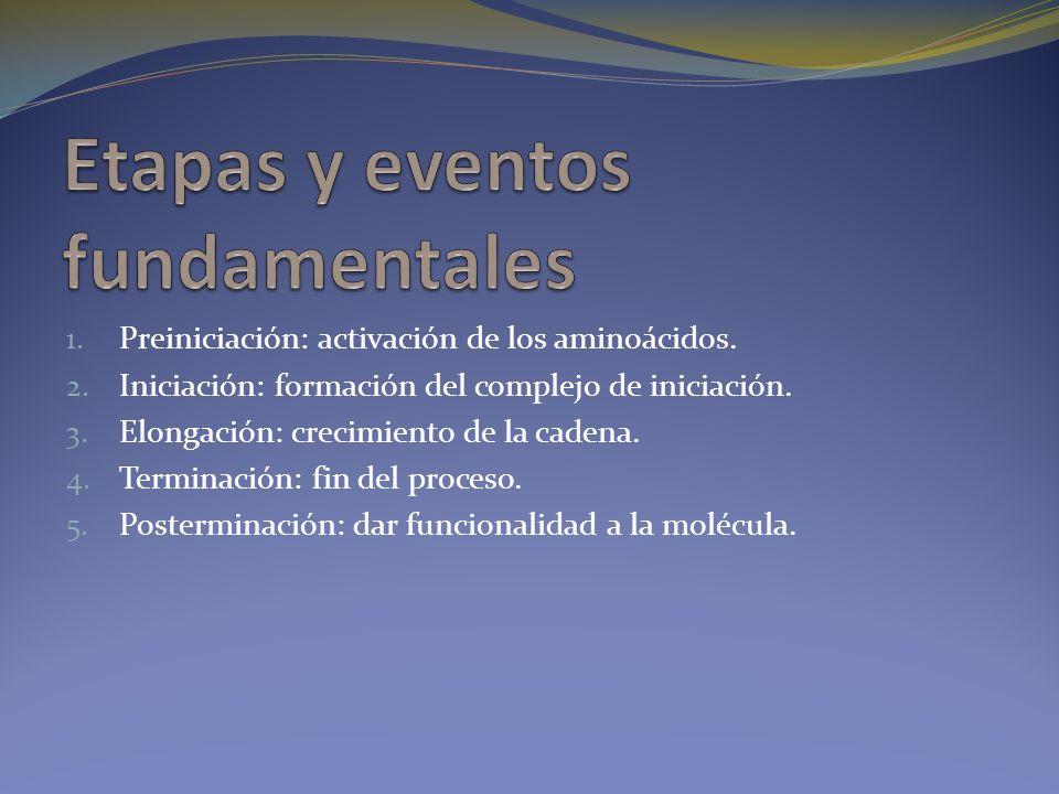 Etapas y eventos fundamentales
