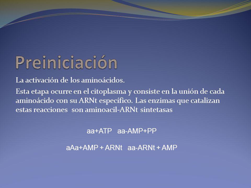 aAa+AMP + ARNt aa-ARNt + AMP