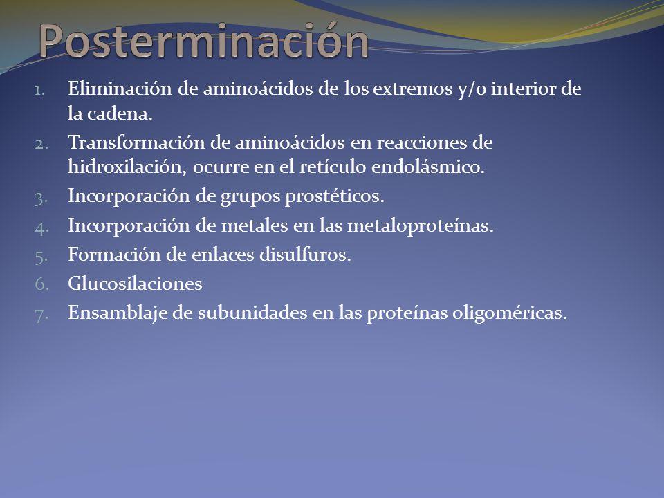 Posterminación Eliminación de aminoácidos de los extremos y/o interior de la cadena.