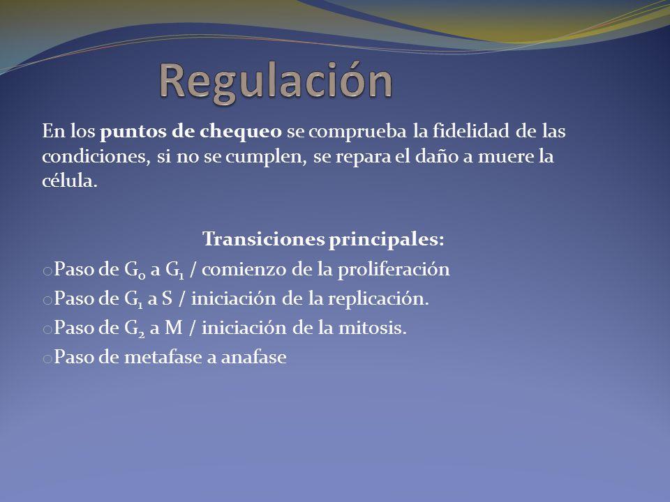 Transiciones principales: