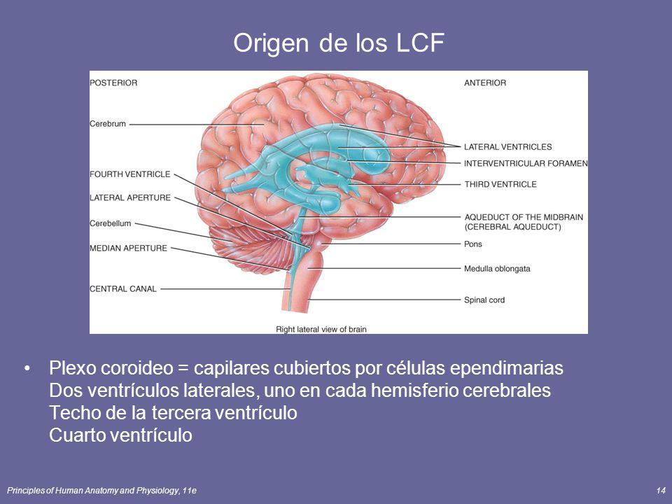Origen de los LCF