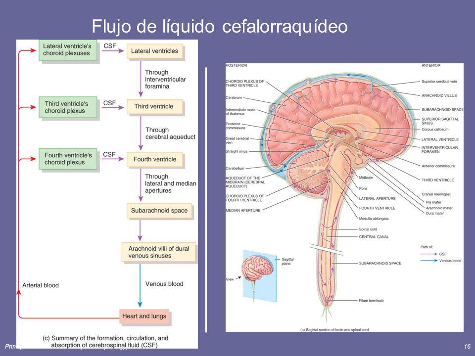 Flujo de líquido cefalorraquídeo