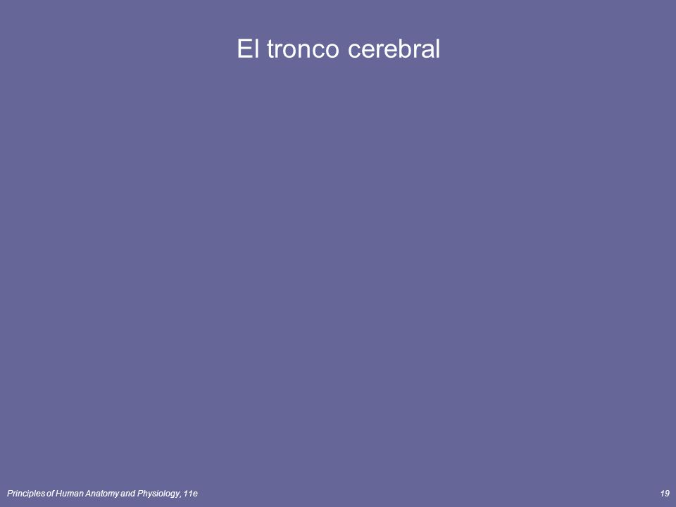 El tronco cerebral Principles of Human Anatomy and Physiology, 11e