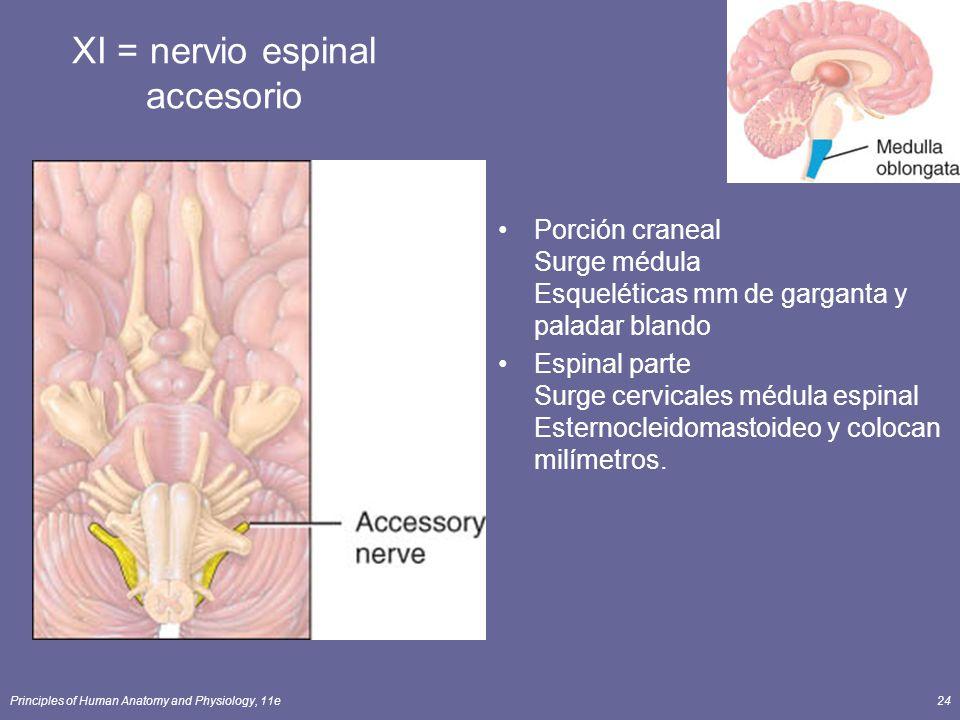 XI = nervio espinal accesorio