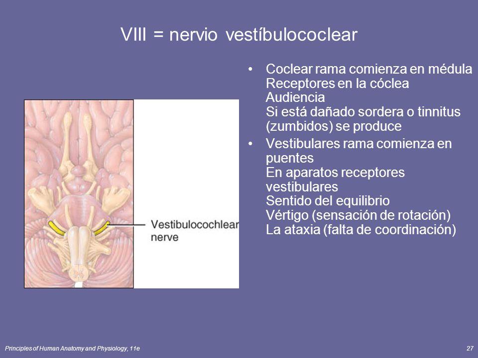 VIII = nervio vestíbulococlear