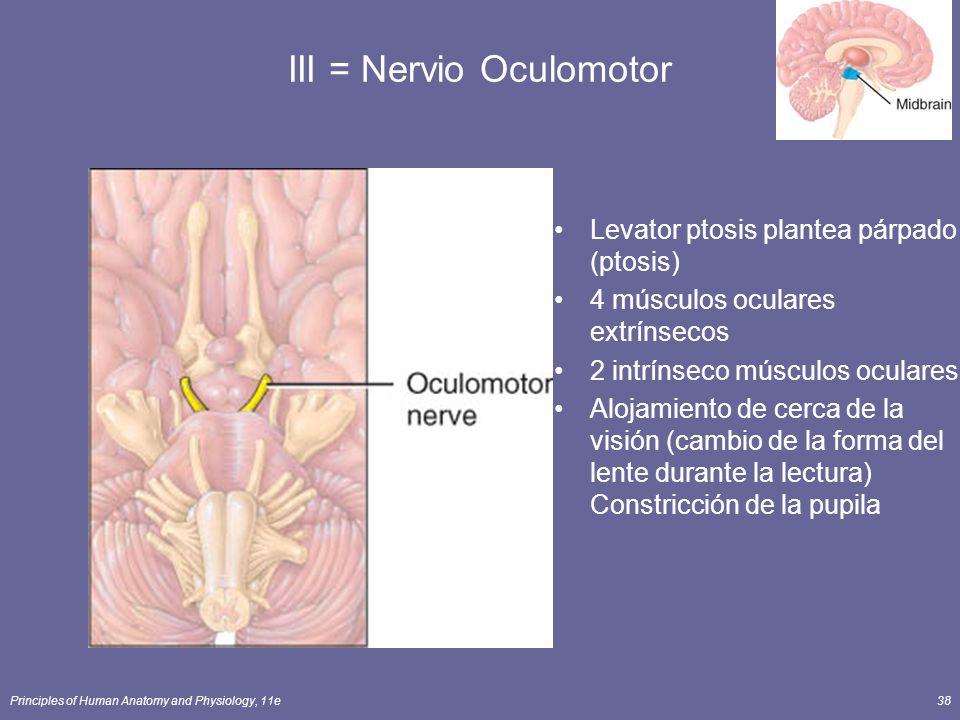 III = Nervio Oculomotor