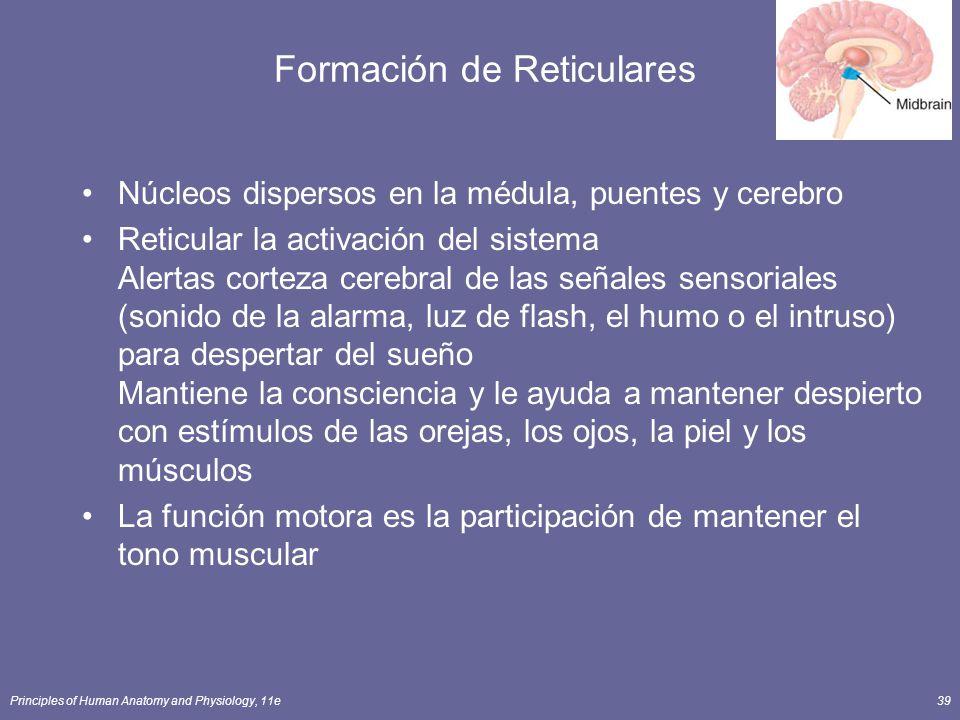 Formación de Reticulares