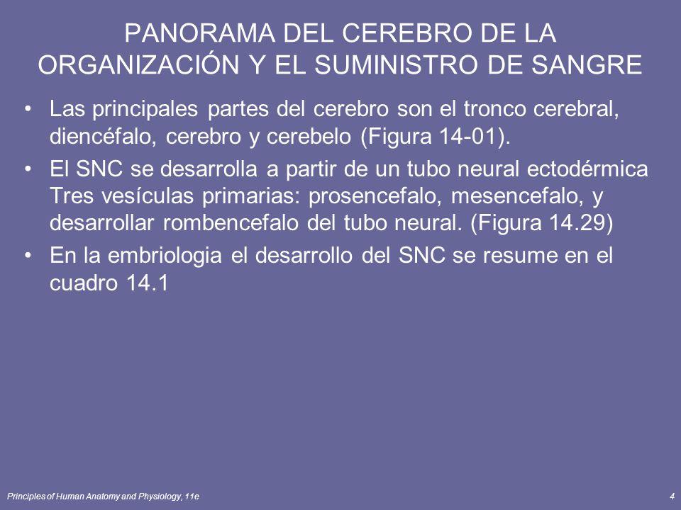 PANORAMA DEL CEREBRO DE LA ORGANIZACIÓN Y EL SUMINISTRO DE SANGRE