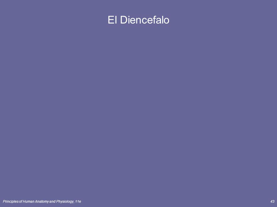 El Diencefalo Principles of Human Anatomy and Physiology, 11e