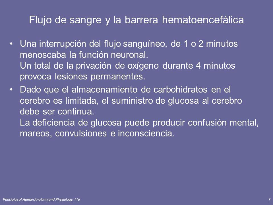 Flujo de sangre y la barrera hematoencefálica