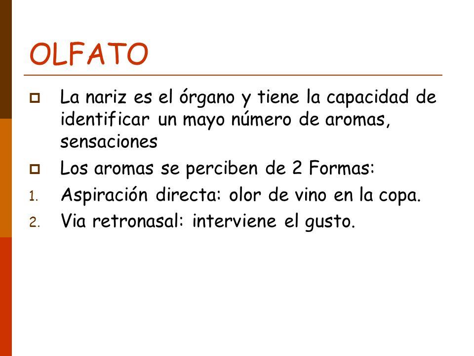OLFATO La nariz es el órgano y tiene la capacidad de identificar un mayo número de aromas, sensaciones.