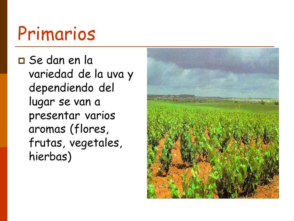 Primarios Se dan en la variedad de la uva y dependiendo del lugar se van a presentar varios aromas (flores, frutas, vegetales, hierbas)