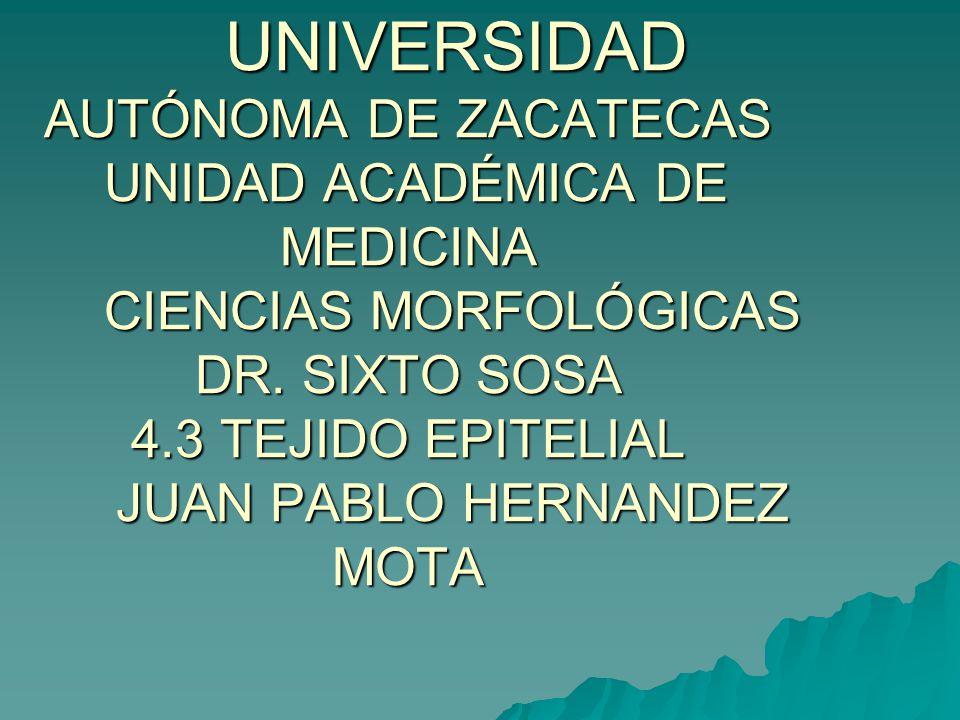 UNIVERSIDAD AUTÓNOMA DE ZACATECAS UNIDAD ACADÉMICA DE MEDICINA CIENCIAS MORFOLÓGICAS DR.