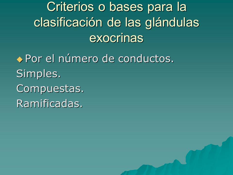 Criterios o bases para la clasificación de las glándulas exocrinas