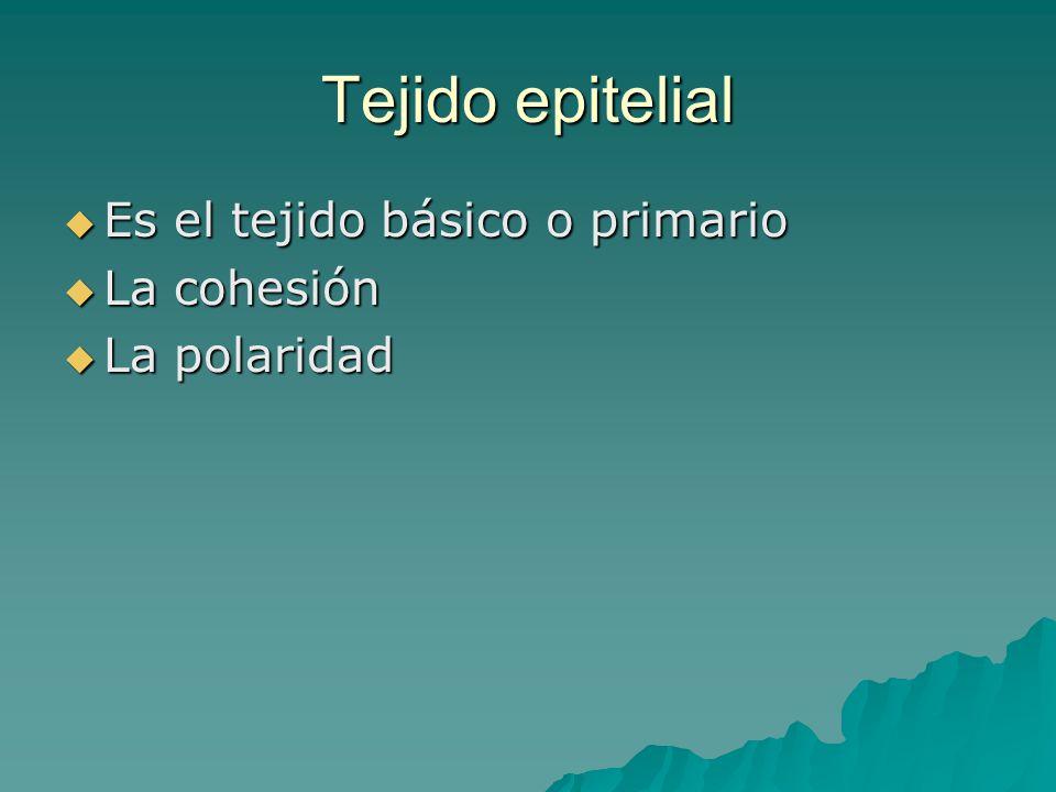 Tejido epitelial Es el tejido básico o primario La cohesión