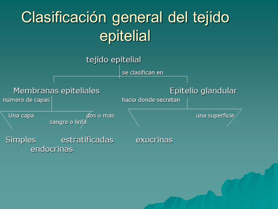 Clasificación general del tejido epitelial