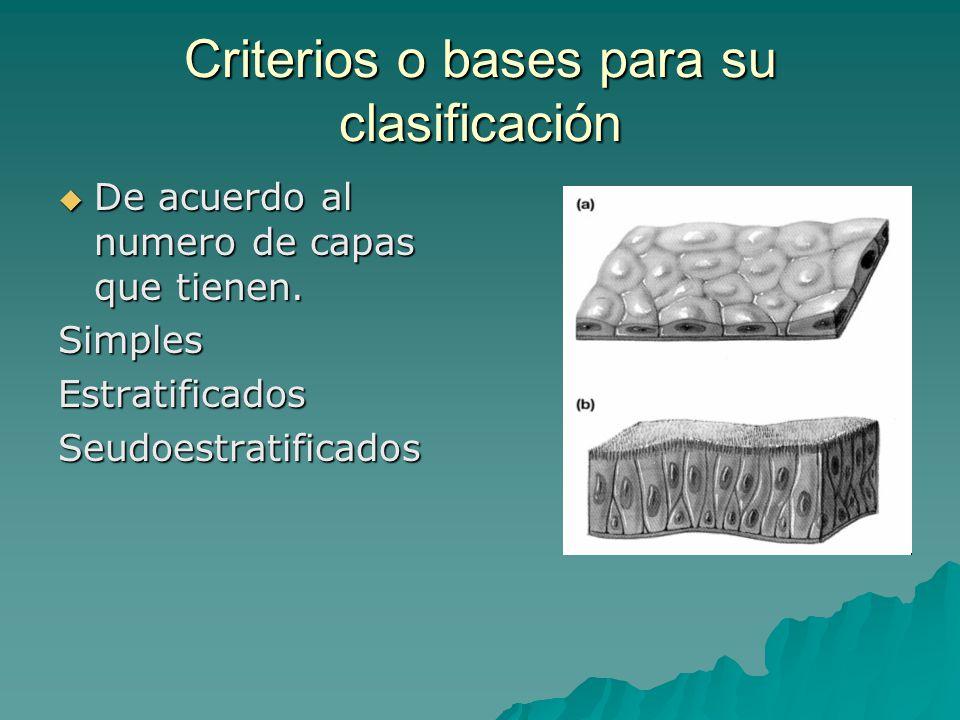 Criterios o bases para su clasificación