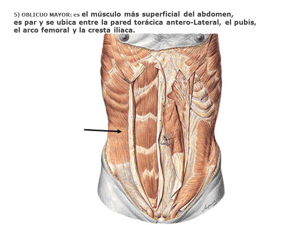 es par y se ubica entre la pared torácica antero-Lateral, el pubis,