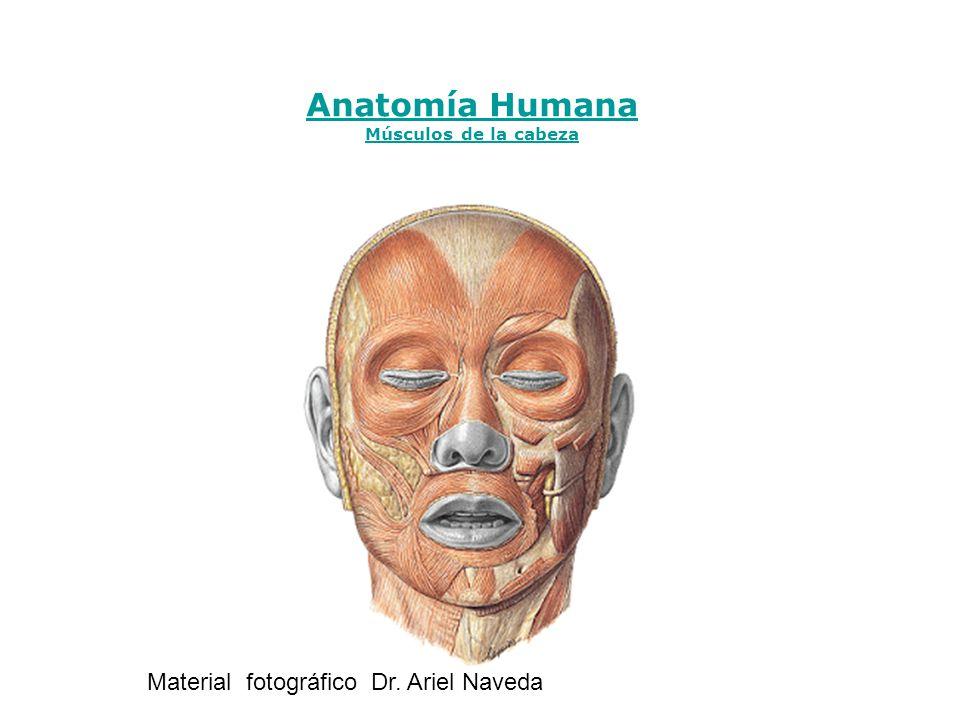 Anatomía Humana Material fotográfico Dr. Ariel Naveda