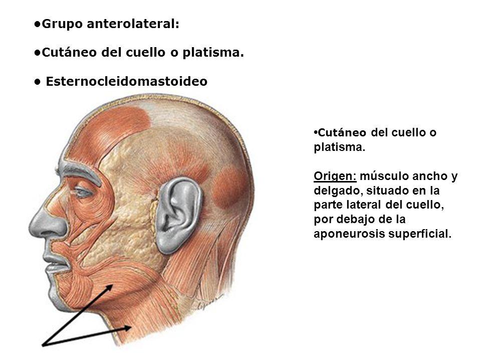 •Grupo anterolateral: