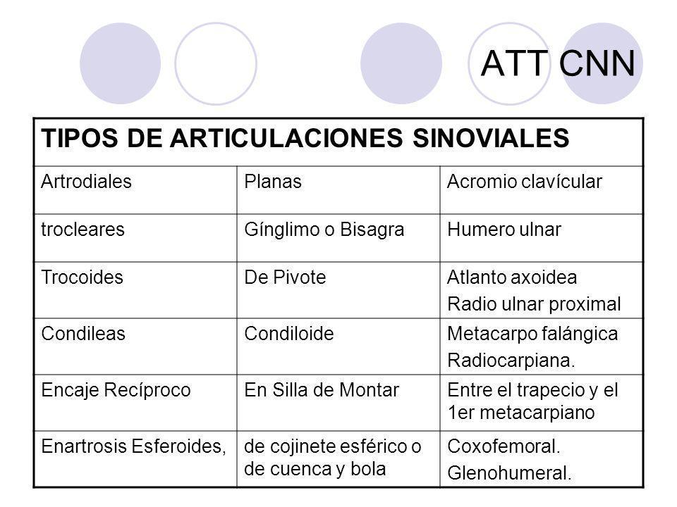 ATT CNN TIPOS DE ARTICULACIONES SINOVIALES Artrodiales Planas