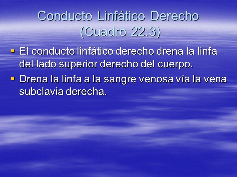 Conducto Linfático Derecho (Cuadro 22.3)