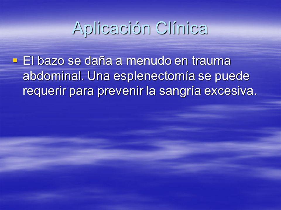 Aplicación Clínica El bazo se daña a menudo en trauma abdominal.