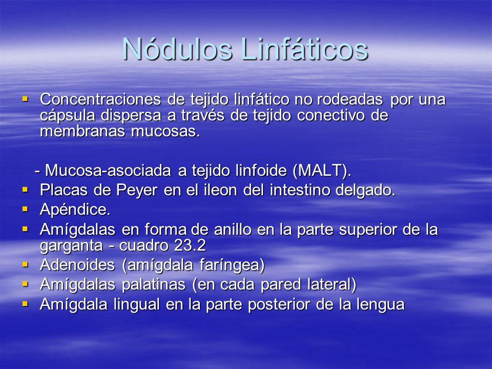 Nódulos Linfáticos Concentraciones de tejido linfático no rodeadas por una cápsula dispersa a través de tejido conectivo de membranas mucosas.