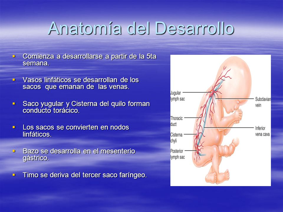 Anatomía del Desarrollo