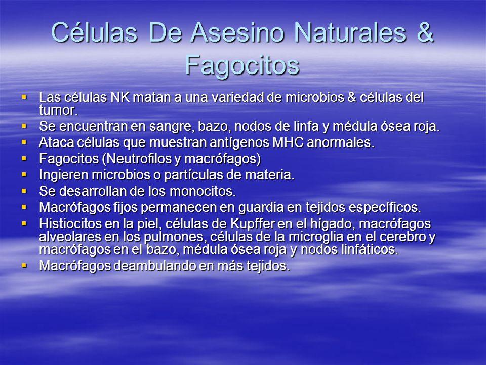 Células De Asesino Naturales & Fagocitos