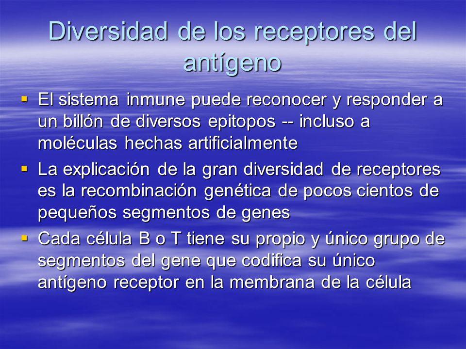 Diversidad de los receptores del antígeno