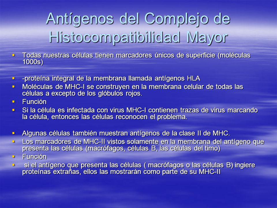 Antígenos del Complejo de Histocompatibilidad Mayor