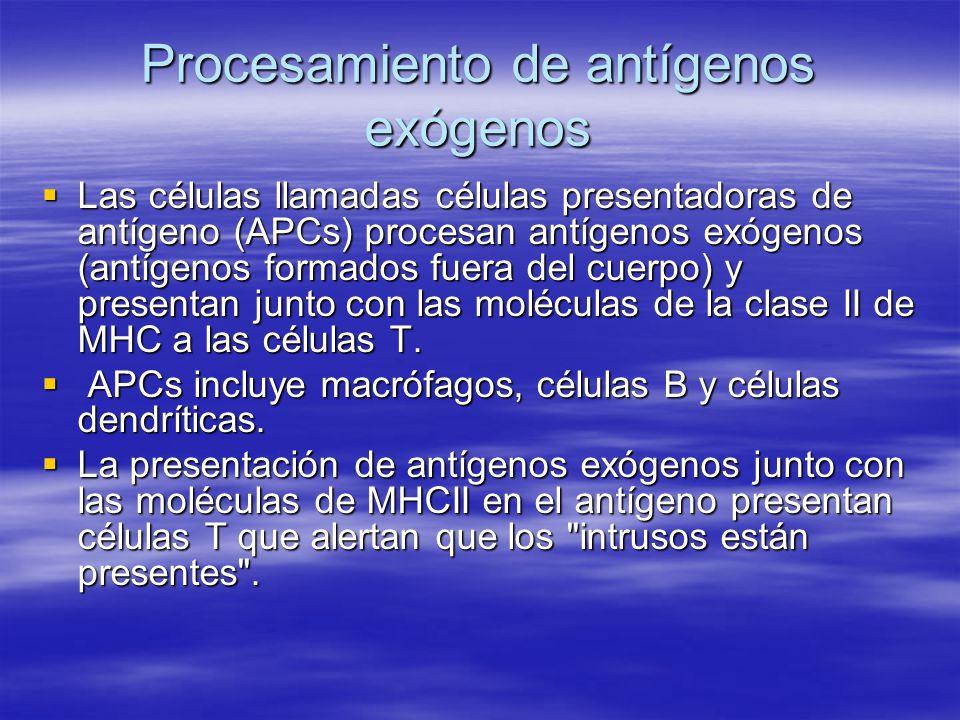 Procesamiento de antígenos exógenos