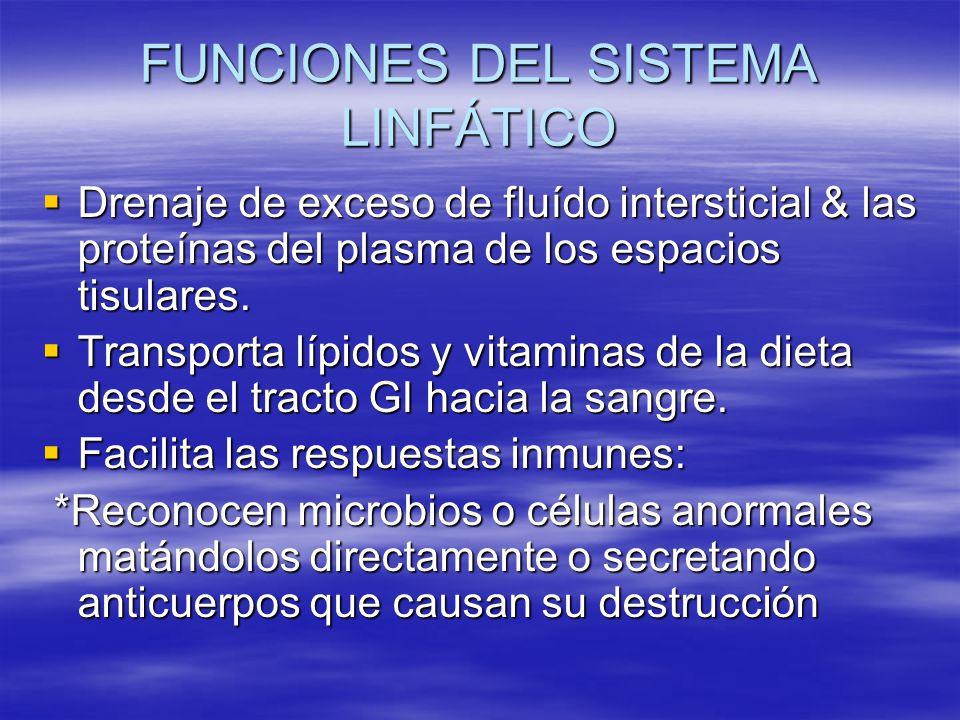 FUNCIONES DEL SISTEMA LINFÁTICO