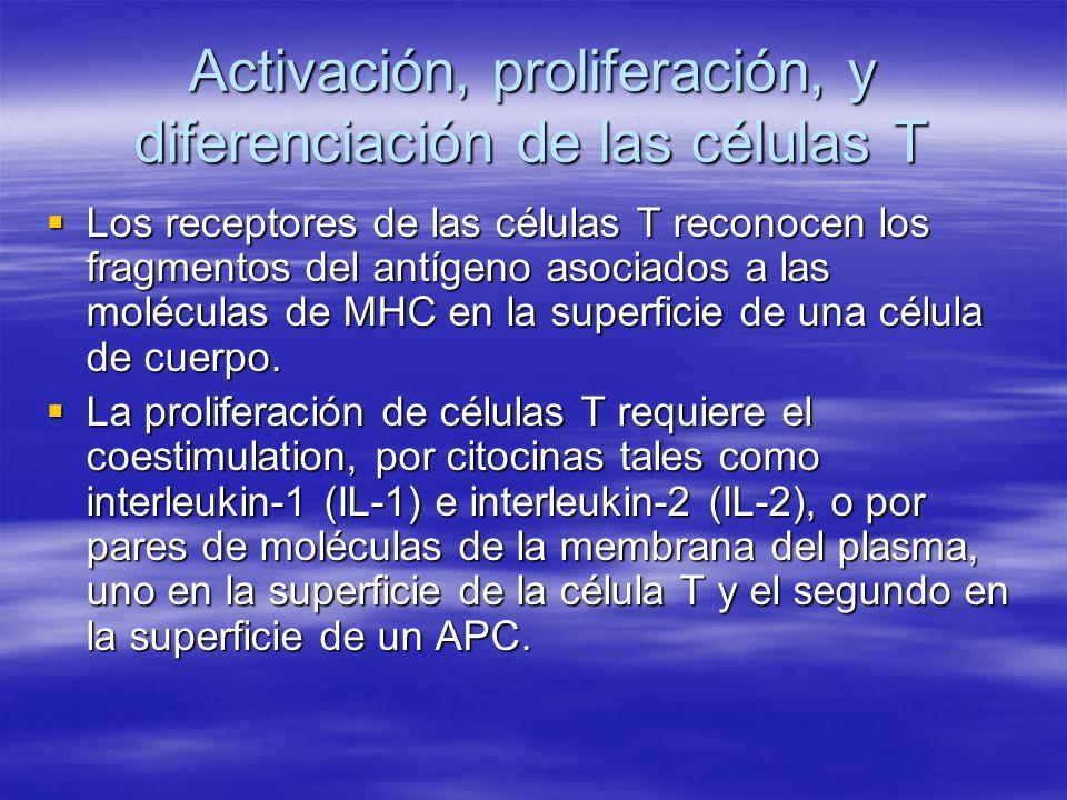 Activación, proliferación, y diferenciación de las células T