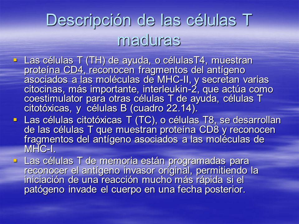 Descripción de las células T maduras
