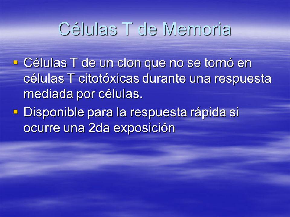 Células T de Memoria Células T de un clon que no se tornó en células T citotóxicas durante una respuesta mediada por células.