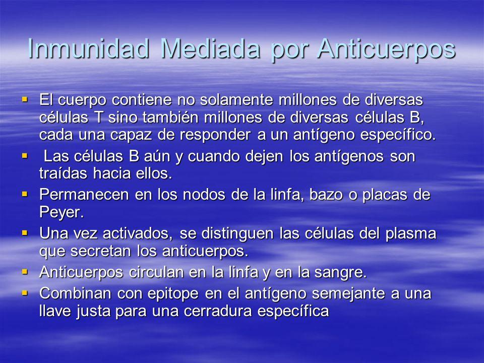 Inmunidad Mediada por Anticuerpos